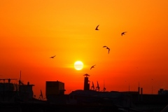 14-RoofTopBirds_C_Anna_13-pts