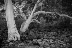 29-Riverbed_M_DenisePetrie_11-pts