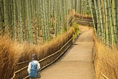 01-BambooForest_C_Ruth_11-pts
